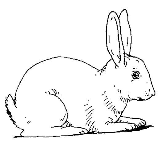planse desene de colorat cu iepuri