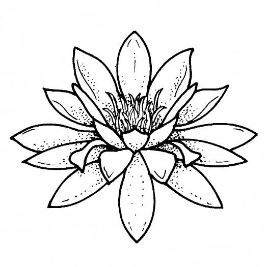 Desene De Colorat Planse Flori De Nufar