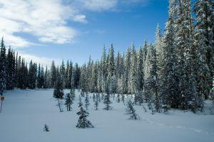 Miezul Desene Iarna Colorat
