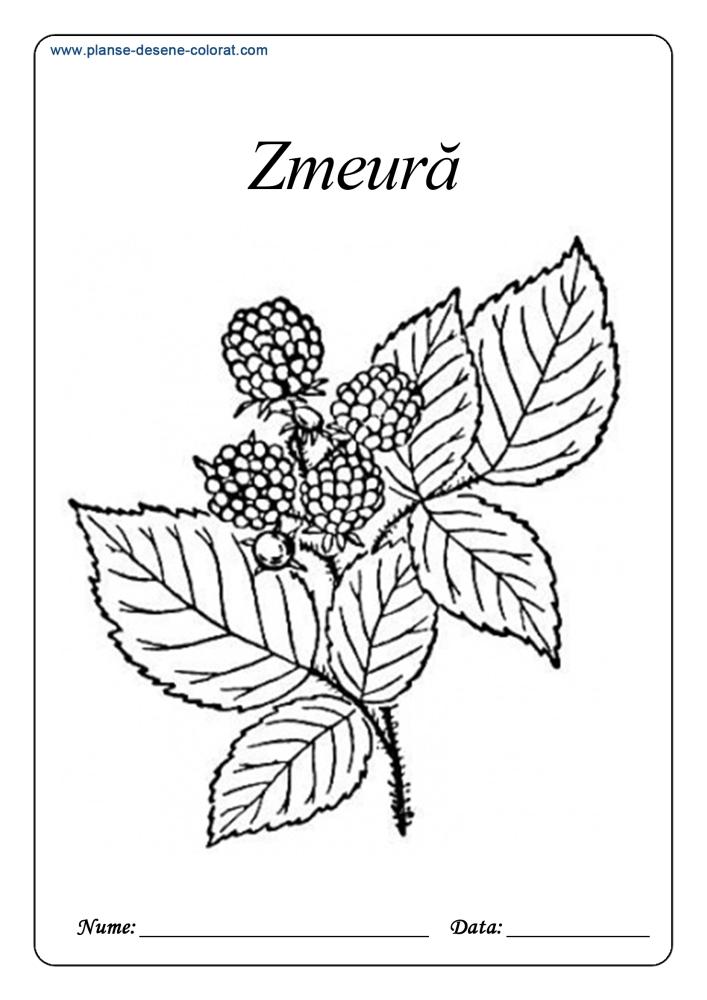 Desene de colorat cu fructe 15