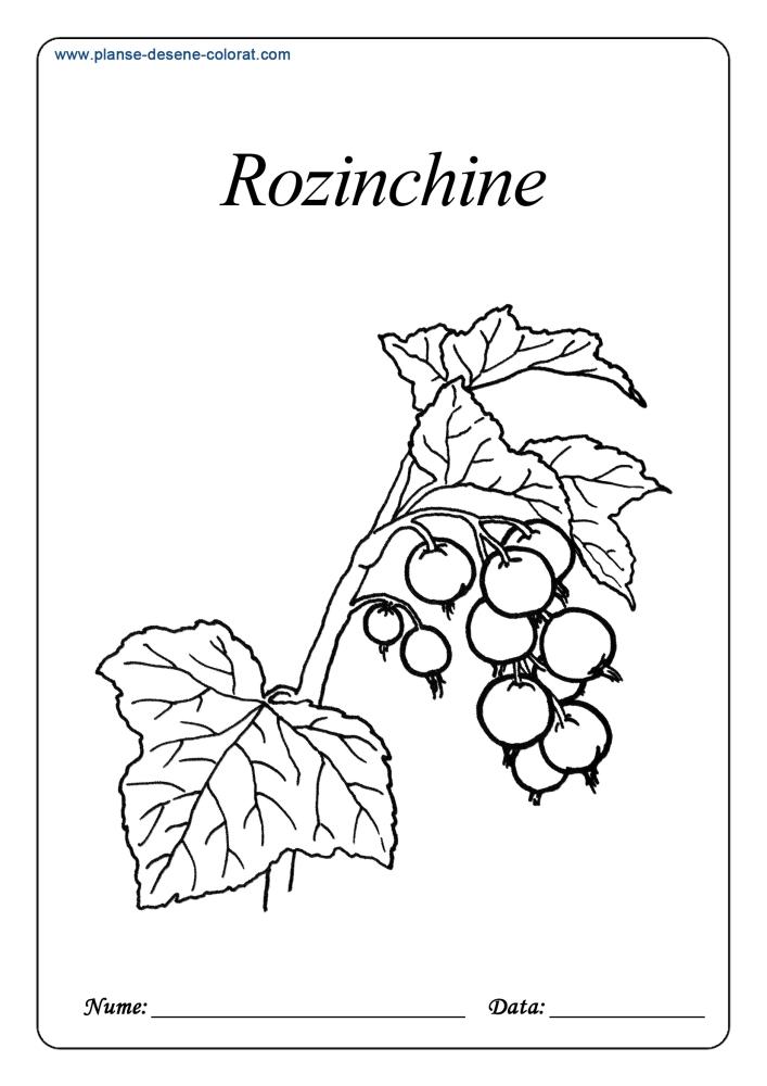 Desene de colorat cu fructe 17