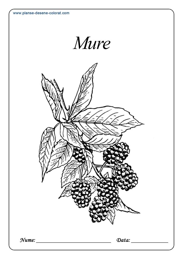 Desene de colorat cu fructe 19
