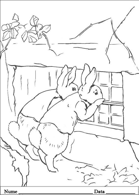 PETER RABBIT  (28)