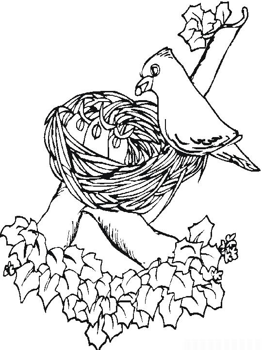 Planse desene de colorat primavara 19