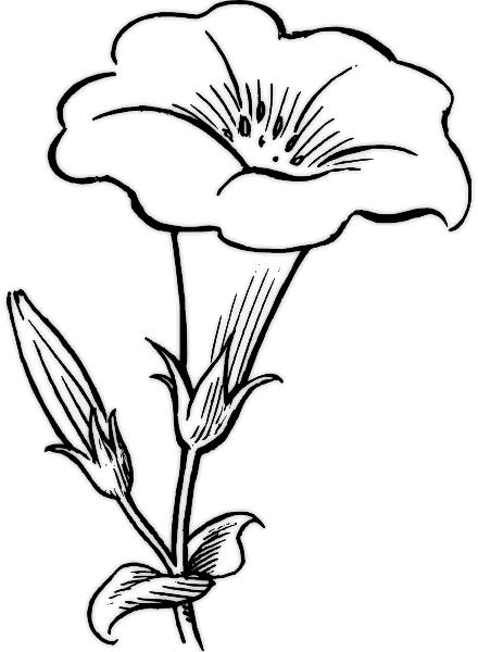 desene de colorat cu flori 1