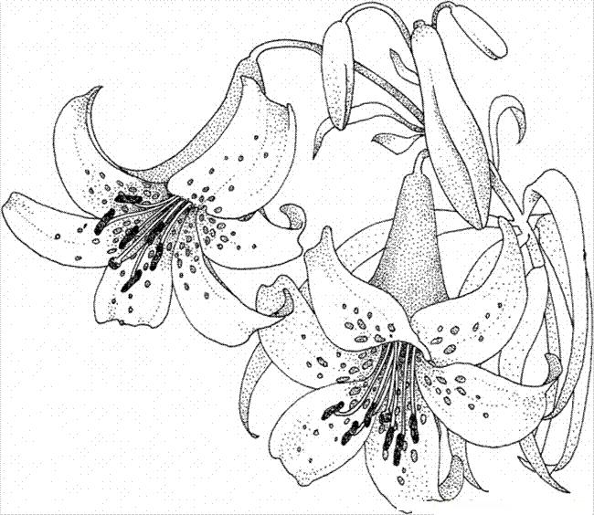 desene de colorat cu flori 13