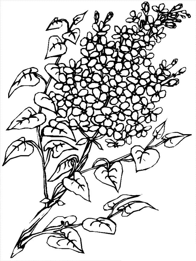 desene de colorat cu flori 14