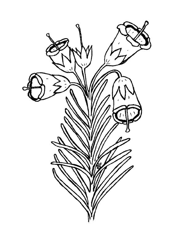 desene de colorat cu flori 16