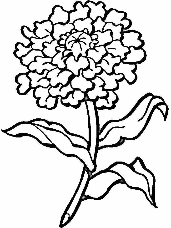 Flori planse de colorat si educative for Plantas ornamentales para colorear