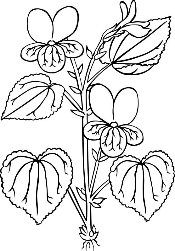 desene de colorat cu flori 3