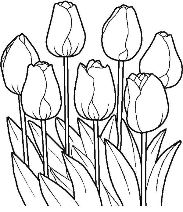 desene de colorat cu flori 4
