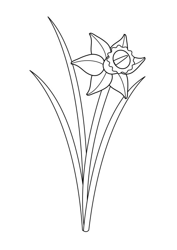 desene de colorat cu flori 6