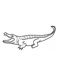 planse de colorat cu aligatori