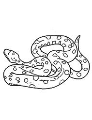planse de colorat cu anaconda