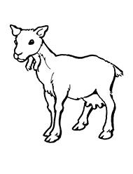 planse de colorat cu capre