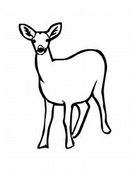 Planse De Colorat Cu Animale Salbatice