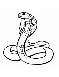 planse de colorat cu cobra