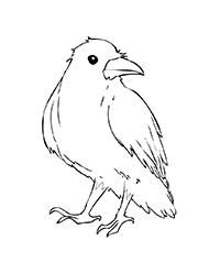 planse de colorat cu corbi