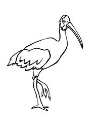 planse de colorat cu ibisi