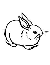 planse de colorat cu iepuri