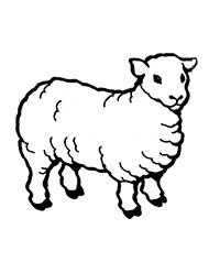 planse de colorat cu oi