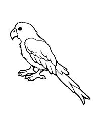 planse de colorat cu papagali