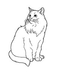 planse de colorat cu pisici