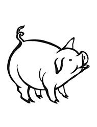 planse de colorat cu porci