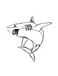 planse de colorat cu rechini