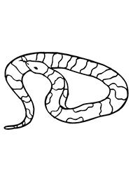 planse de colorat cu serpi