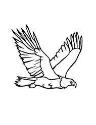 planse de colorat cu vulturi