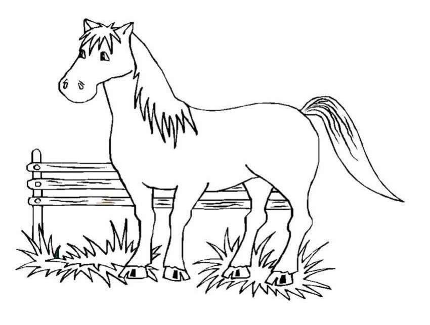 planse desene de colorat cal 12