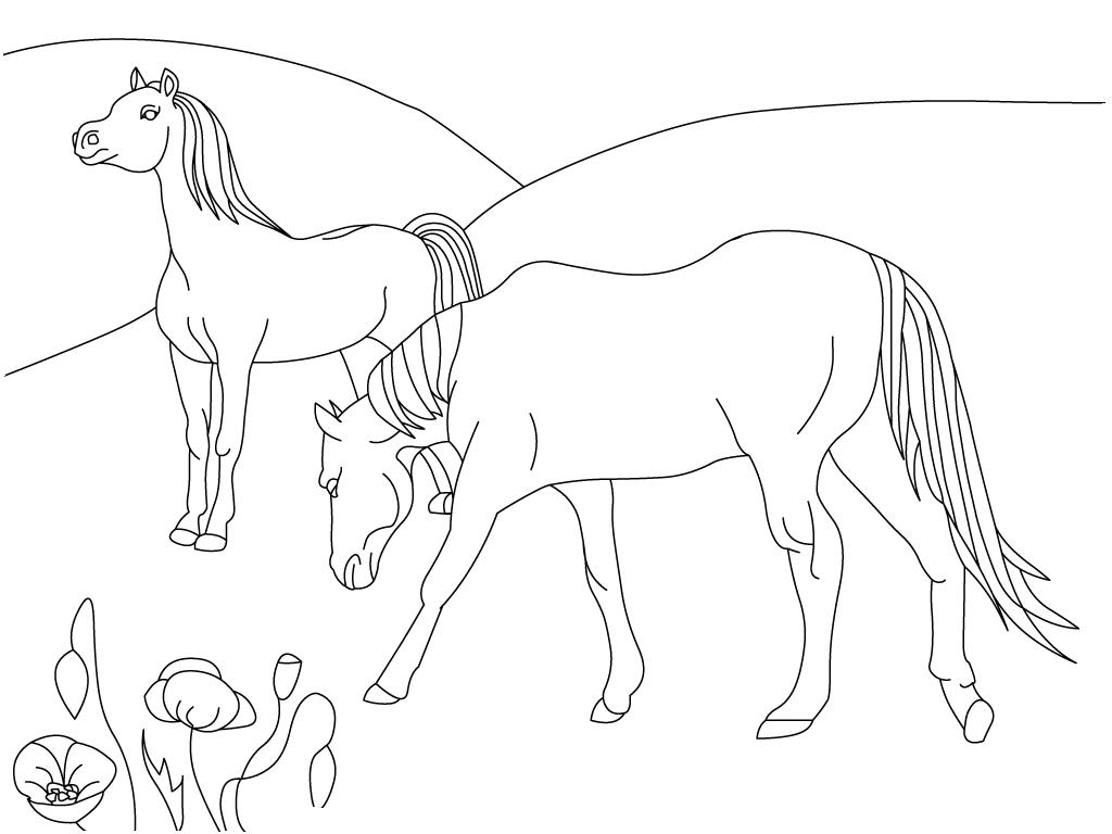 planse desene de colorat cal 20