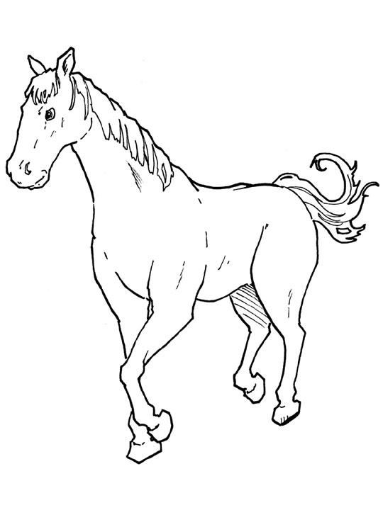 planse desene de colorat cal 22