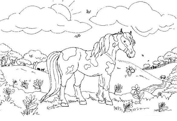 planse desene de colorat cal 42