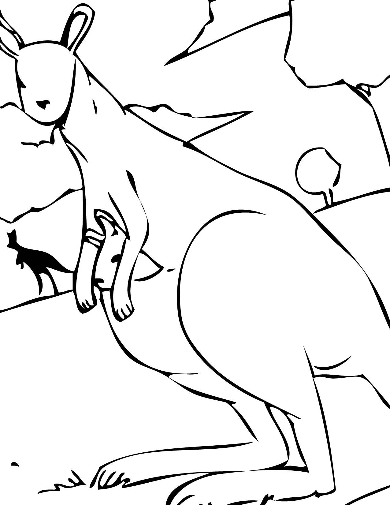 planse desene de colorat cangur 23