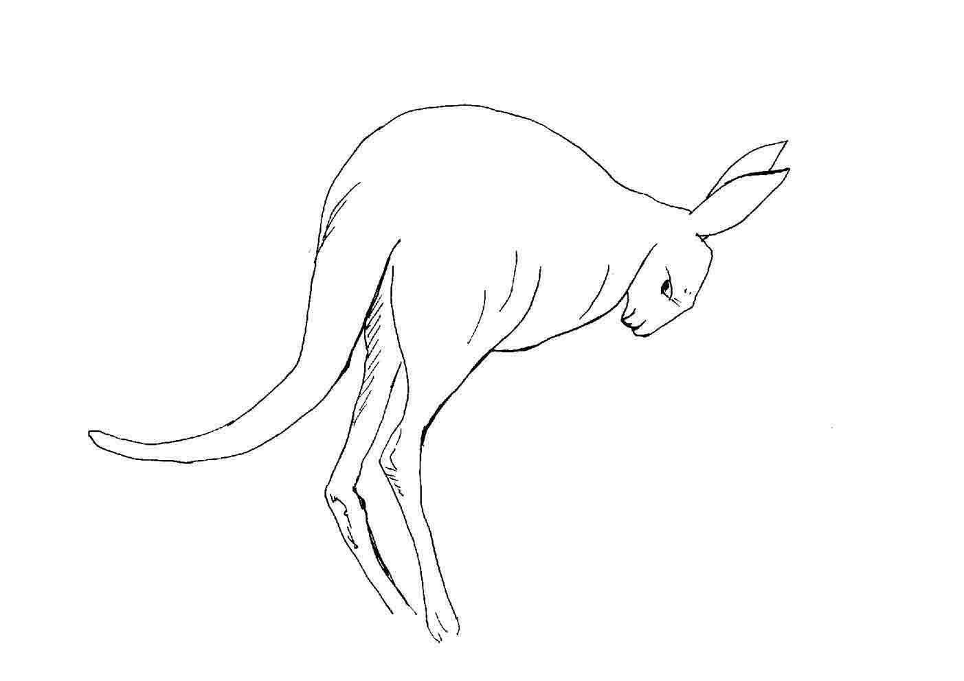 planse desene de colorat cangur 5