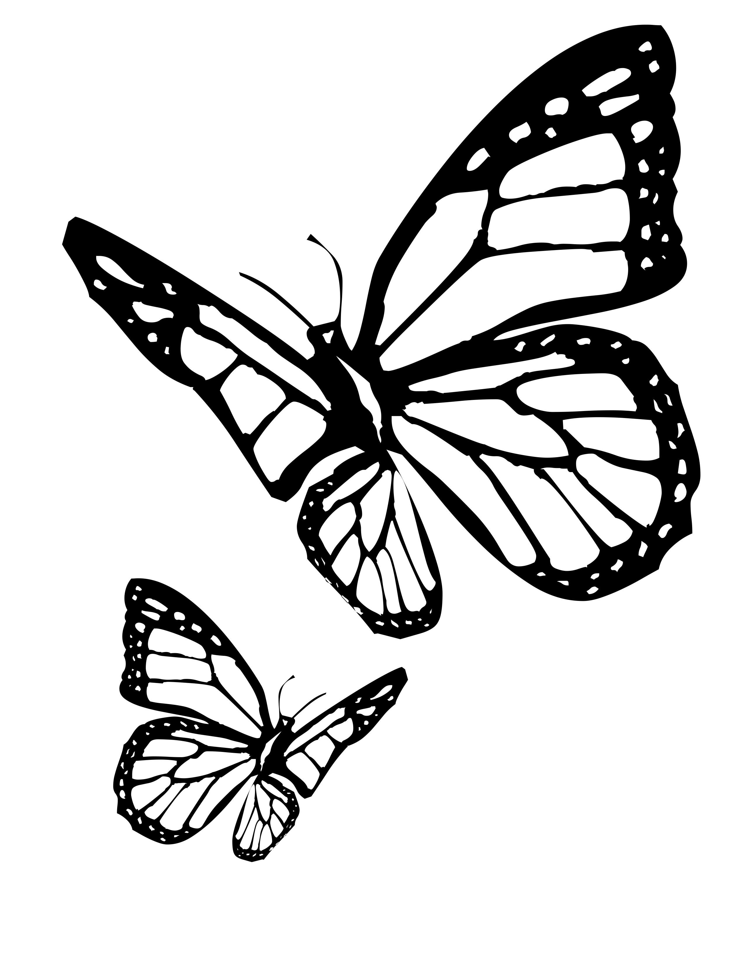 planse desene de colorat fluture 10