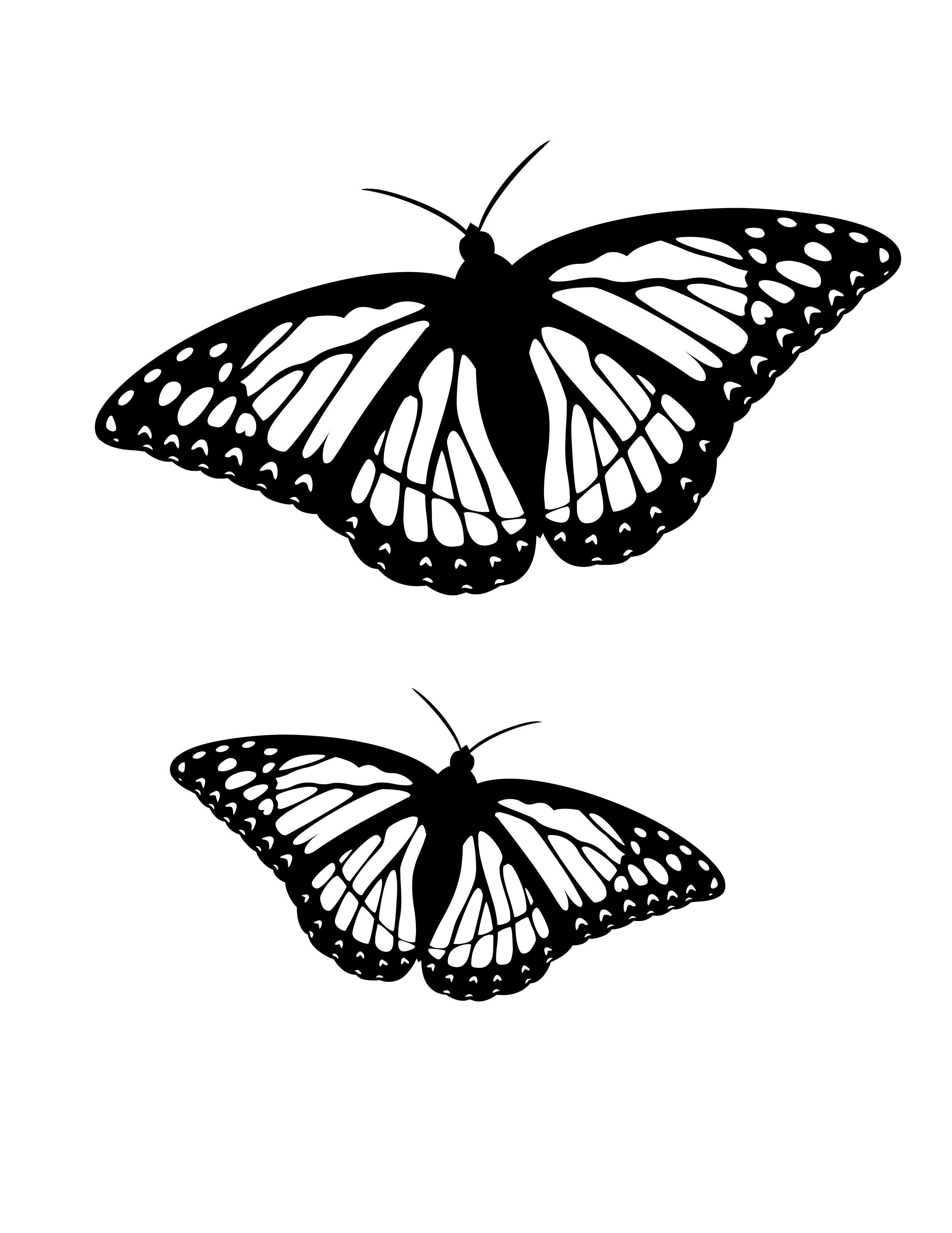 planse desene de colorat fluture 11