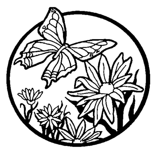planse desene de colorat fluture 14