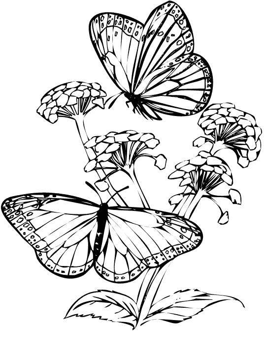 planse desene de colorat fluture 5