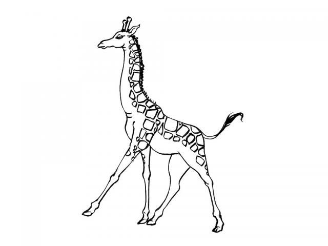 Planse Desene De Colorat Girafa 13 Planse De Colorat Si