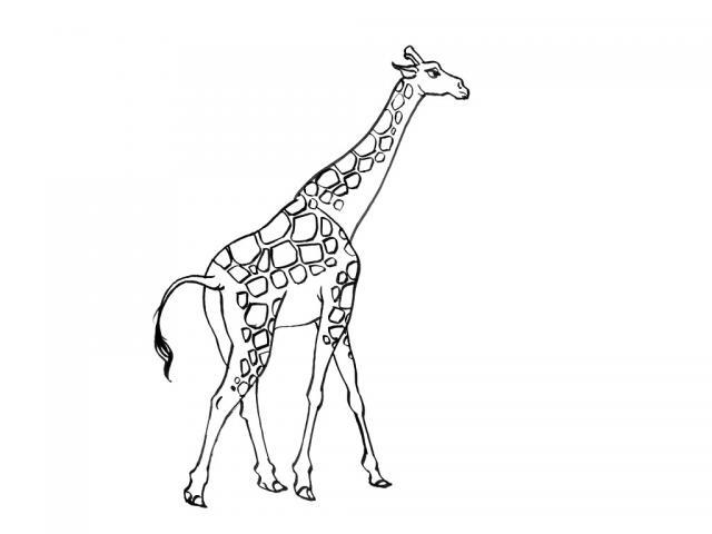 Planse Desene De Colorat Girafa 14 Planse De Colorat Si