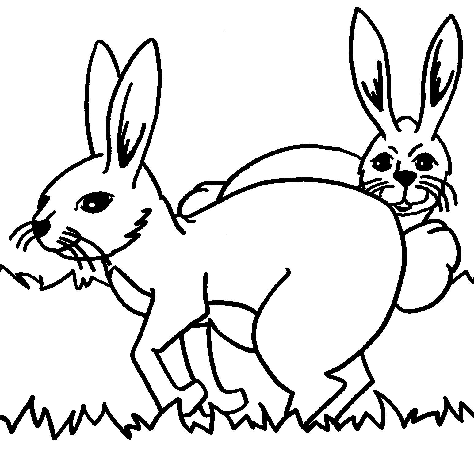 planse desene de colorat iepure 17
