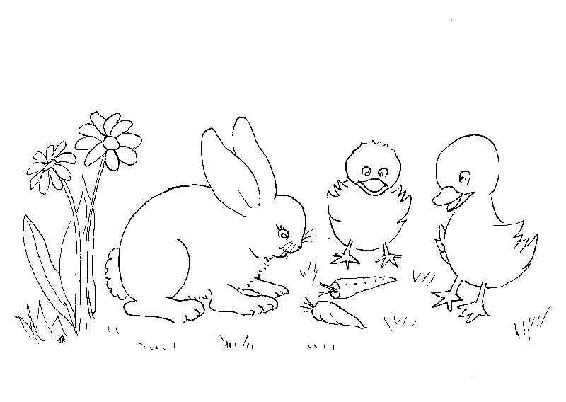 planse desene de colorat iepure 18