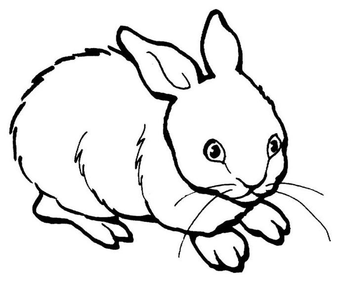 planse desene de colorat iepure 27