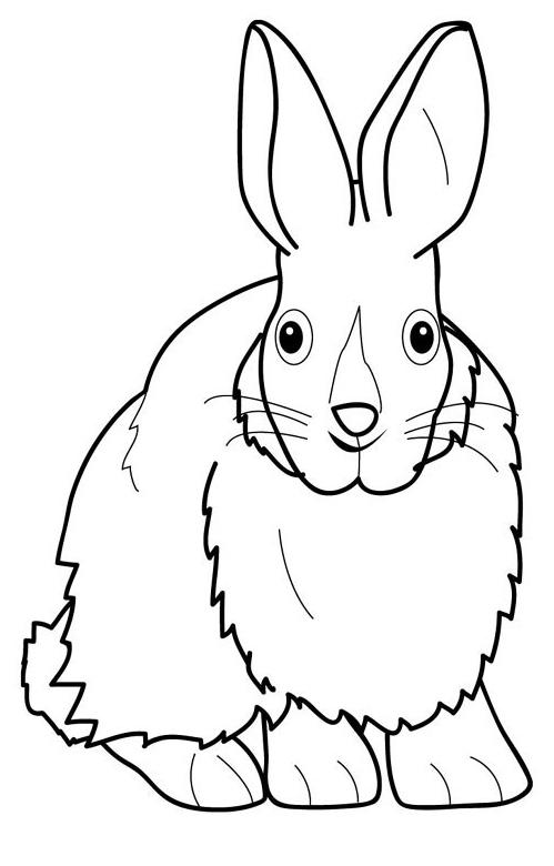 planse desene de colorat iepure 29