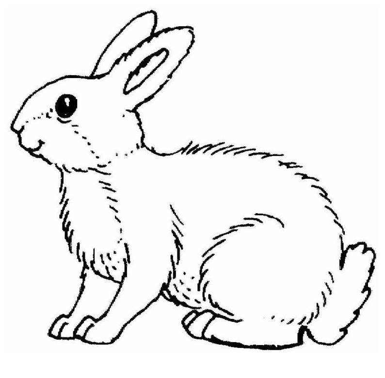 planse desene de colorat iepure 30