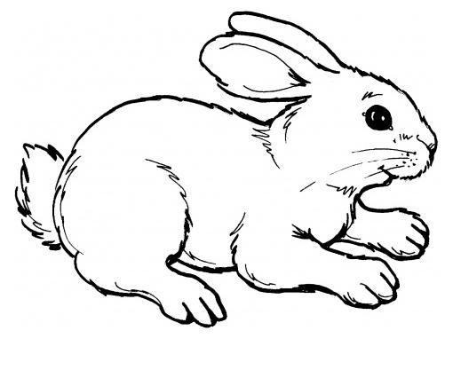 planse desene de colorat iepure 32