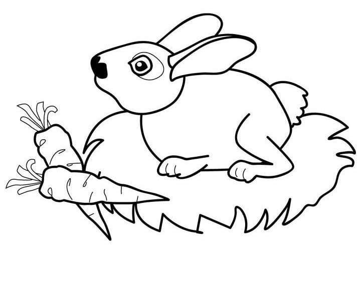 planse desene de colorat iepure 36